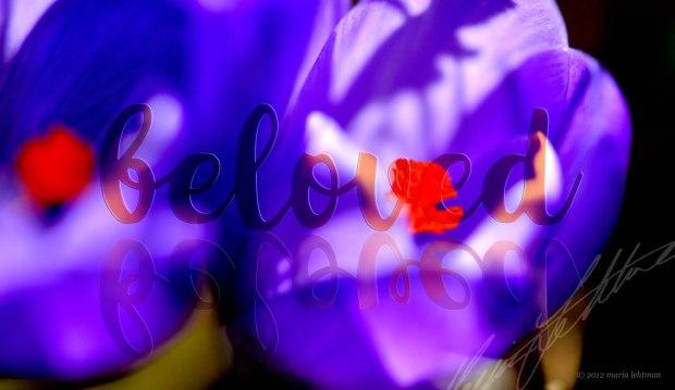 _8040139-1-photochallenge_dailypost_beloved_srs