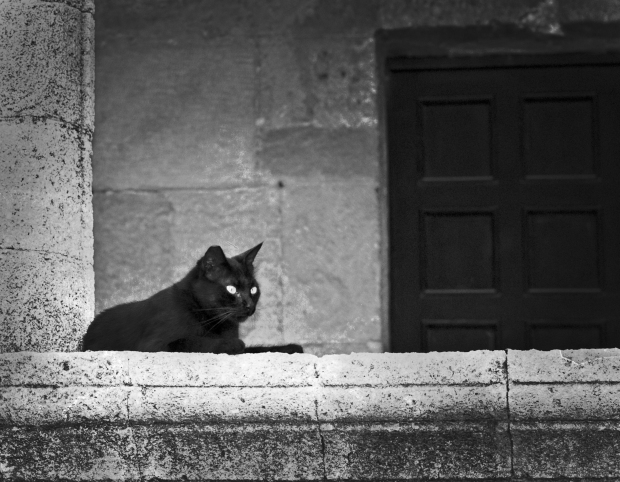 cat_rodos_old_town2