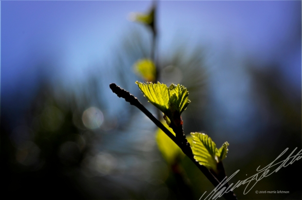_6053586_1_cr_digitalcontrarian_springleaves_srs